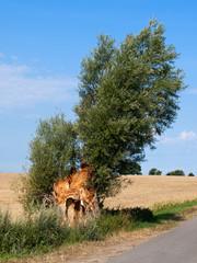 alter Baum im Wind