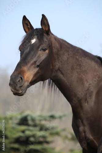 Portrait of nice brown mare