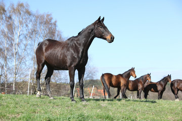 Nice horse standing on pasturage with other horses in background