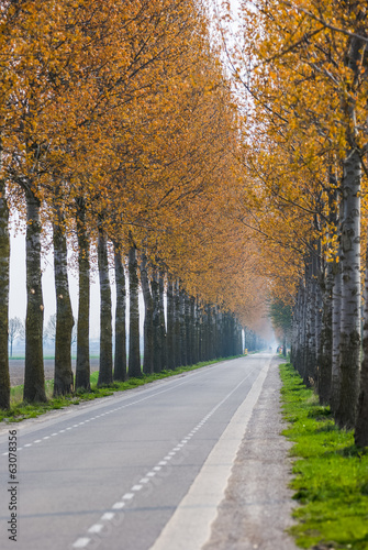 Blurd autumn trees along a straight road in Netherlands