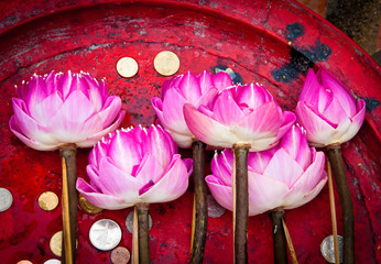 Lotus flower for Buddhist religious ceremony