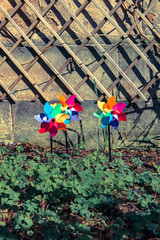 Three coloured pinwheels in a garden. Vintage effect.