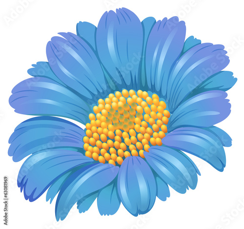 A fresh blue flower