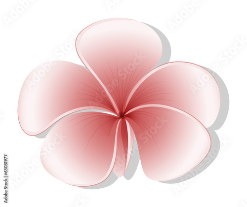 A light colored flower
