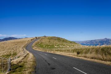 Sheep farm along the roadside to Akaroa town, New Zealand