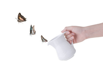 Butterfly flying from teapot spout isolated