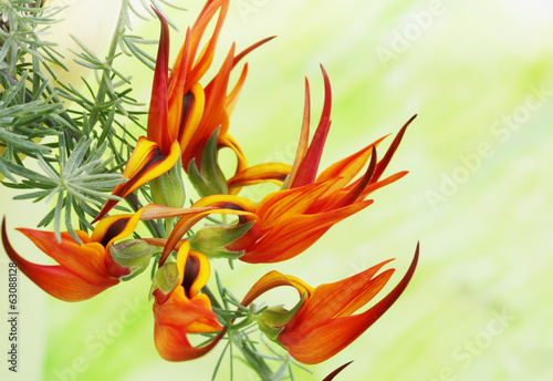 exotic fiery orange flower