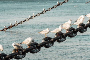 White bird seagulls