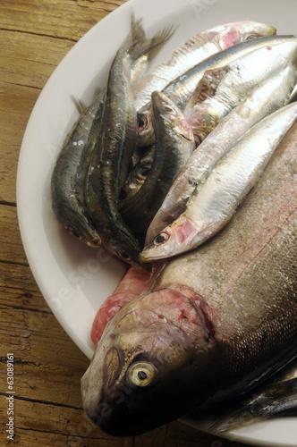 Fresh seafood Pescado fresco Pesce fresco