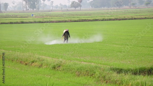 Spraying in rice field