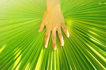 Hand auf Palmblatt