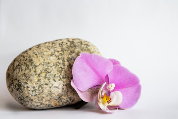 orchid stone