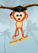 monkey graduate