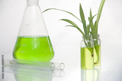 Green plant in laboratory