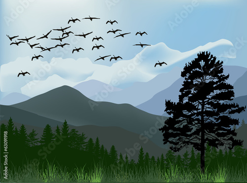 birds flying above mountains
