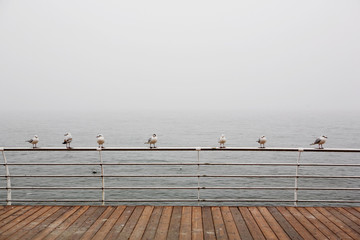 seagulls sitting on the railing in the misty sea