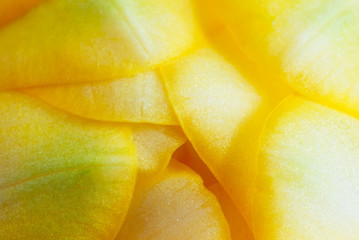 Detail of yellow freesia petals
