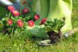 plantation de fleurs au jardin
