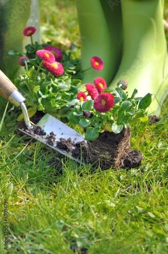 plantation de fleur au jardin