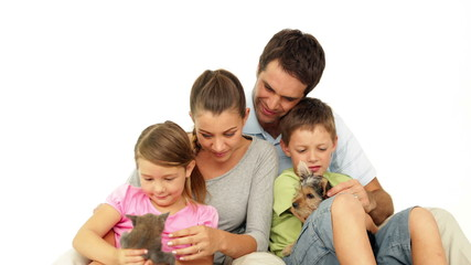 Cute family with a little grey kitten and yorkshire terrier