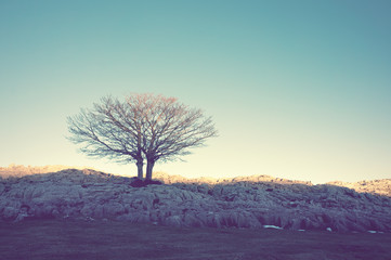 lonely tree with vintage effect
