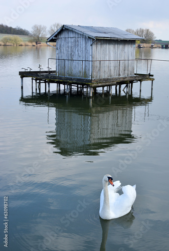 Swan and Fishing Hut