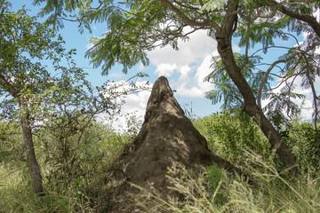 big termite hill