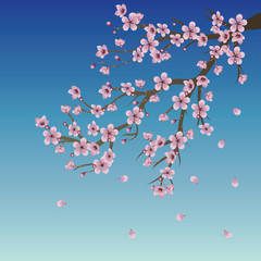 Branch of Sakura over Sky