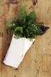 Medicinal plants Planta medicinal Heilpflanze