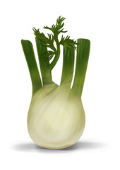 Simple, realistic green fennel illustration, front view.
