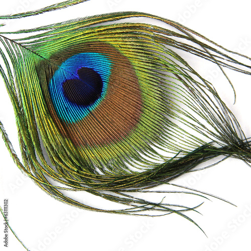 Peacock feather isolated on white background - Close-up view