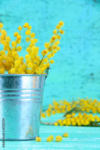 Twigs of mimosa flowers in pail on blue wooden table