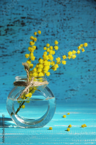 Twigs of mimosa flowers in vase on blue wooden table