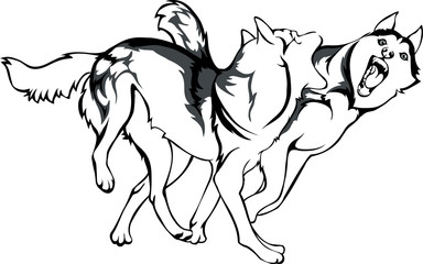 vector drawing of fighting dogs