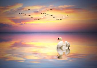 fauna en el lago de colores