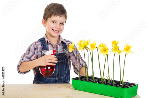 Boy watering a flowers on the desk