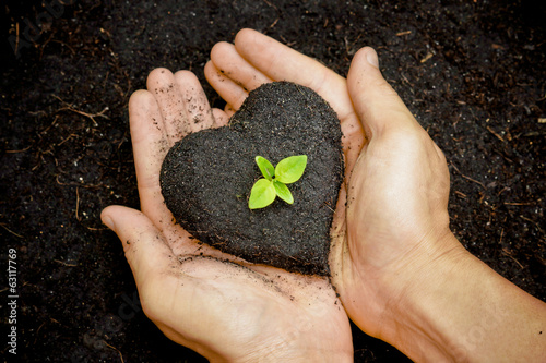 hand holding soil as a heart shape with a tree / grow tree