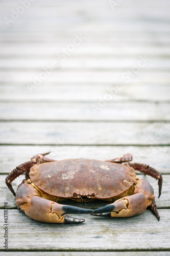 Crab on the weathered wooden terrace