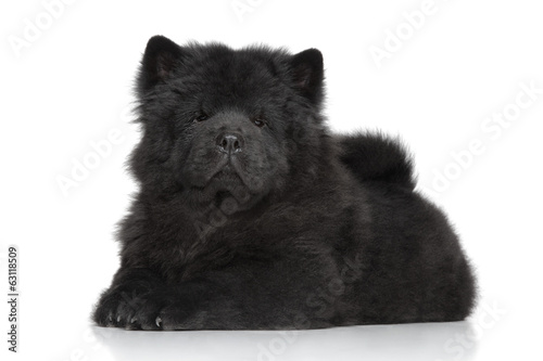 Black Chow-chow long-haired puppy