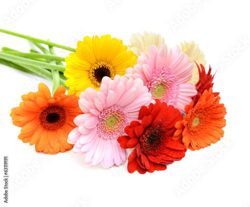 Keuken foto achterwand Gerbera Gerbera daisy