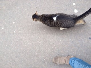 walking with cat
