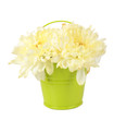 Beautiful chrysanthemum flowers in bucket isolated on white