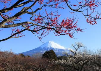 富士と紅梅