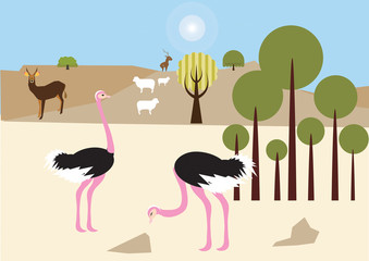Ostriches in the desert