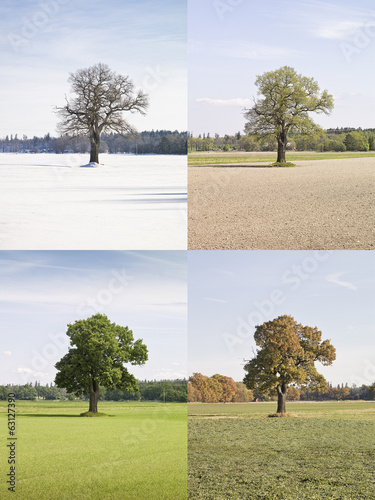 Four season tree