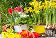 canvas print picture - Blumen pflanzen im Frühling :)