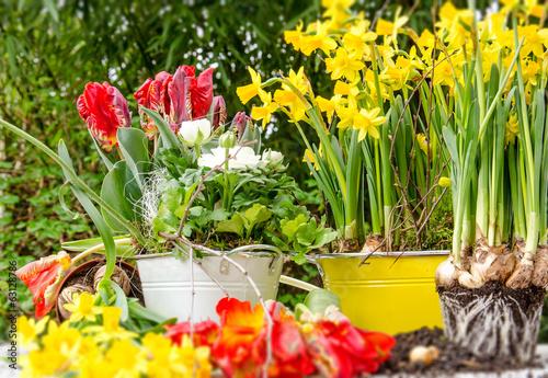 canvas print picture Blumen pflanzen im Frühling :)