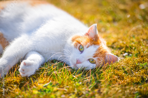 Cute cat with green eyes in the garden