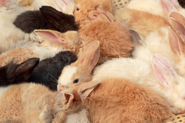 A lot rabbits for sale