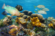 Underwater scenery with fish in a coral reef